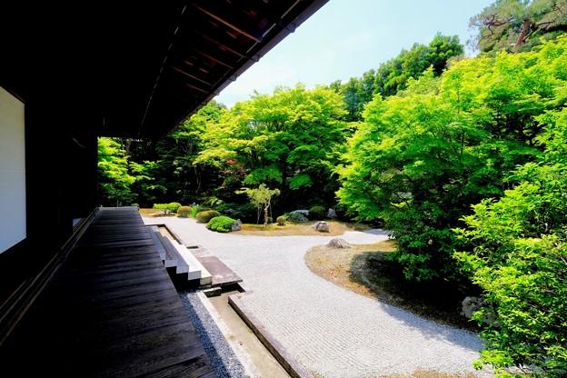 緑色の庭園へ-京都市東山区:泉涌寺