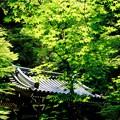 Photos: 緑の波-京都市東山区:今熊野観音寺