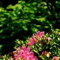 Photos: 移ろう季節-京都市東山区:今熊野観音寺