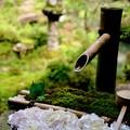 美しい庭園-京都府長岡京市:楊谷寺