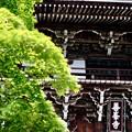 Photos: 山門-京都市西京区:善峯寺