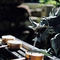 Photos: 龍の口-奈良県天川村:龍泉寺