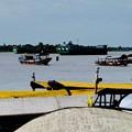 Photos: 悠々たる流れ-Mekong River, Viet Nam