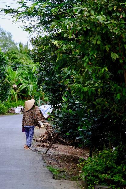 ジャングルの島-Cai Be, Viet Nam