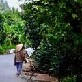 Photos: ジャングルの島-Cai Be, Viet Nam
