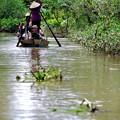 意外に涼しいジャングルの中-Cai Be, Viet Nam