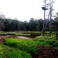 Photos: 北八ヶ岳へ-長野県茅野市:北八ヶ岳