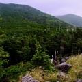 Photos: 下界とは違う-長野県茅野市:北八ヶ岳