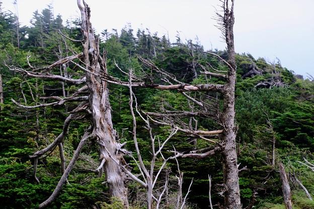 季節風-長野県茅野市:北八ヶ岳