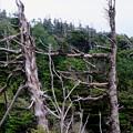 Photos: 季節風-長野県茅野市:北八ヶ岳