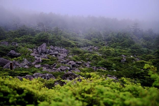 日本庭園のごとく-長野県茅野市:北八ヶ岳