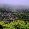 Photos: 日本庭園のごとく-長野県茅野市:北八ヶ岳