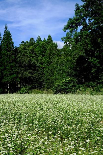 蕎麦畑-長野県白馬村
