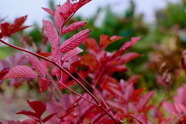 一足早い秋-長野県白馬村:八方池