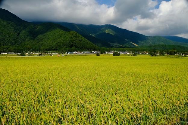 白馬源流米-長野県白馬村