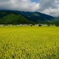 Photos: 白馬源流米-長野県白馬村