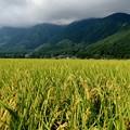 ずっと雲の中-長野県白馬村