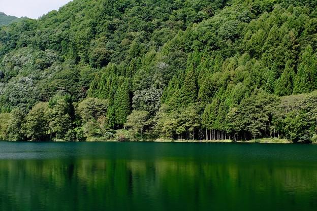 緑に染まる-長野県大町市:中綱湖