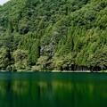 Photos: 緑に染まる-長野県大町市:中綱湖