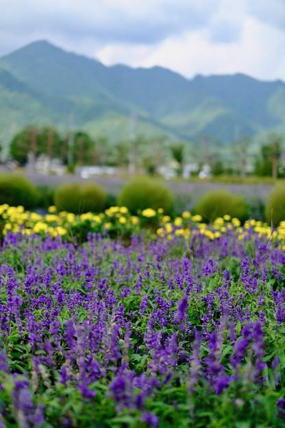 また来る日まで-長野県安曇野市:安曇野ちひろ美術館