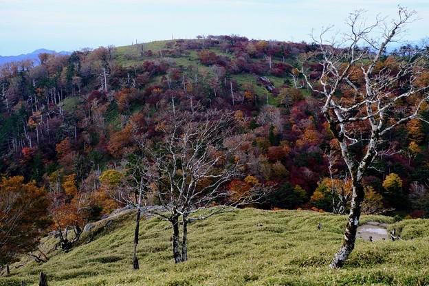 関西も紅葉が始まった-奈良県上北山村:大台ヶ原山