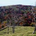Photos: 関西も紅葉が始まった-奈良県上北山村:大台ヶ原山