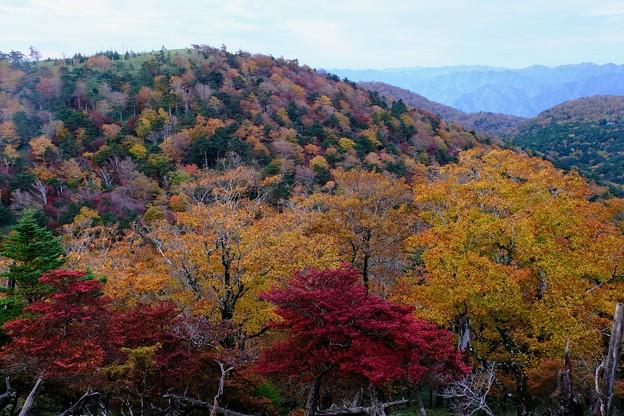 絢爛豪華な秋-奈良県上北山村:大台ヶ原山