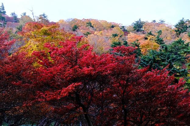 この国に生まれて-奈良県上北山村:大台ヶ原山