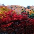 Photos: この国に生まれて-奈良県上北山村:大台ヶ原山