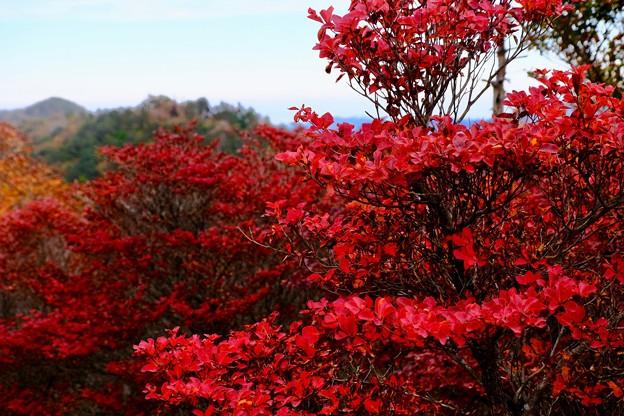 真っ赤な秋ー奈良県上北山村:大台ヶ原山