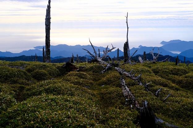 白骨化した森-奈良県上北山村:大台ヶ原山