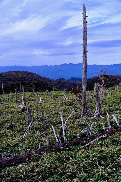 立ち枯れした木々-奈良県上北山村:大台ヶ原山