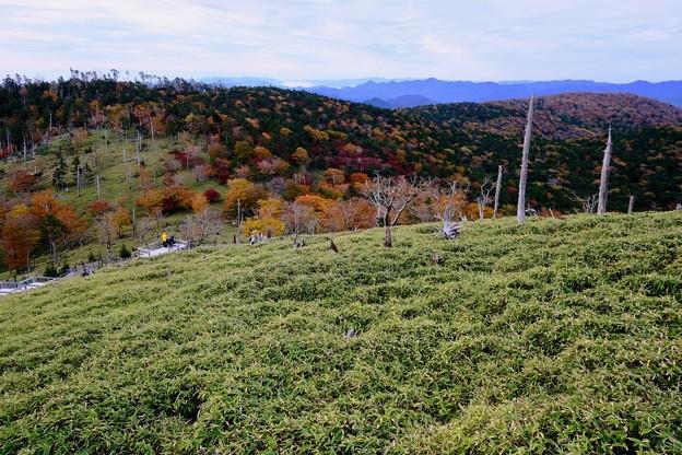 Photos: 山粧う-奈良県上北山村:大台ヶ原山