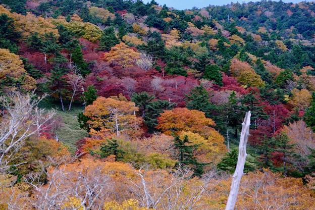 新たな楽しみ-奈良県上北山村:大台ヶ原山