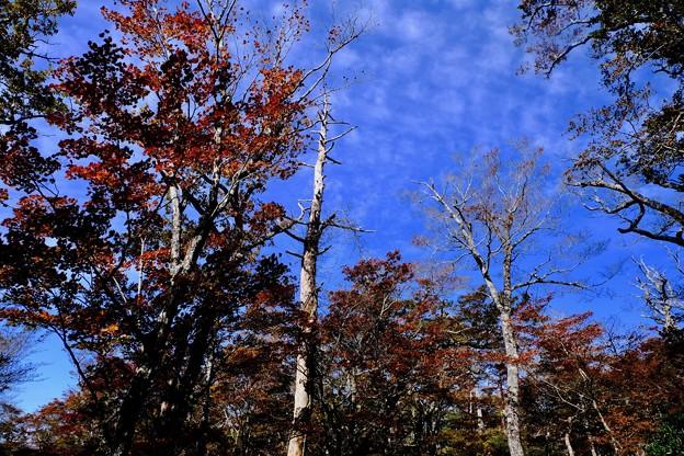 青空-奈良県上北山村:大台ヶ原山