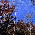 Photos: 青空-奈良県上北山村:大台ヶ原山