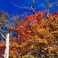 今年の秋-奈良県上北山村:大台ヶ原山