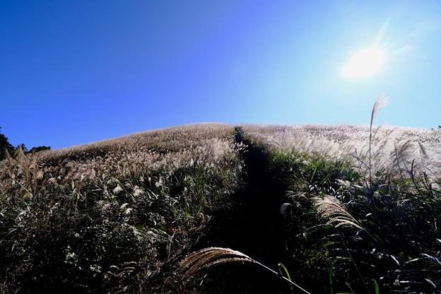 秋を満喫-大阪府河内長野市:岩湧山