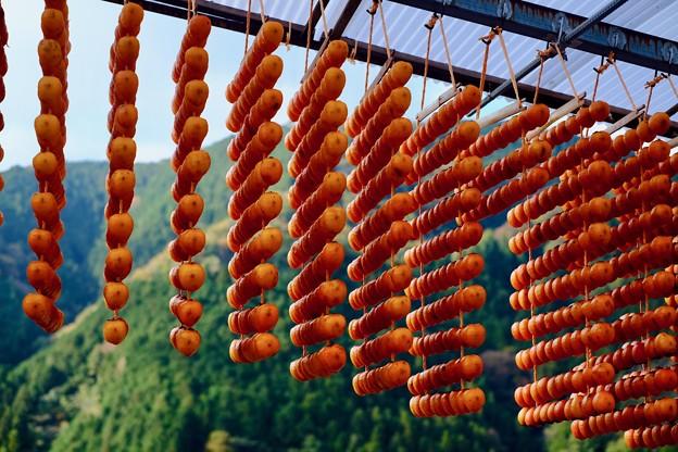 柿の生産-和歌山県かつらぎ町:四郷