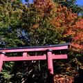 関西の紅葉も見頃に近づいてきました-奈良県桜井市:談山神社