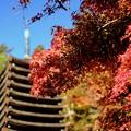 Photos: 十三重塔-奈良県桜井市:談山神社