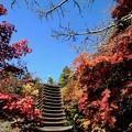 Photos: あと何度紅葉を-奈良県桜井市:談山神社
