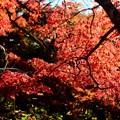 歴史好き-奈良県桜井市:談山神社