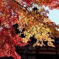 脈々と続く歴史-奈良県桜井市:談山神社