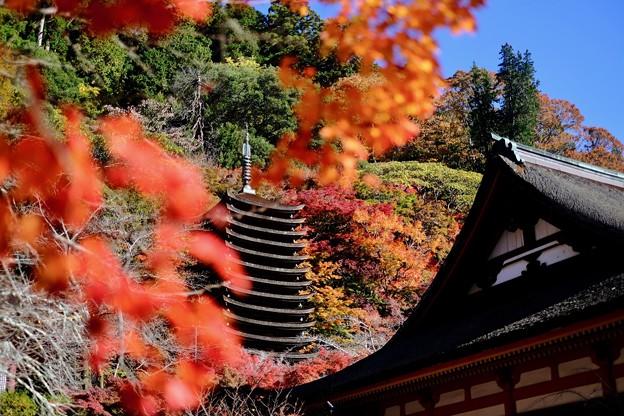 けまりの庭-奈良県桜井市:談山神社