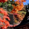 Photos: けまりの庭-奈良県桜井市:談山神社