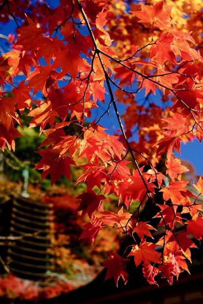 今年の紅葉は-奈良県桜井市:談山神社