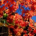 Photos: 今年の紅葉は-奈良県桜井市:談山神社