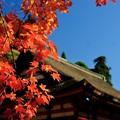Photos: 人生の扉-奈良県桜井市:談山神社