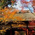 小倉山の麓にて-京都市右京区:常寂光寺